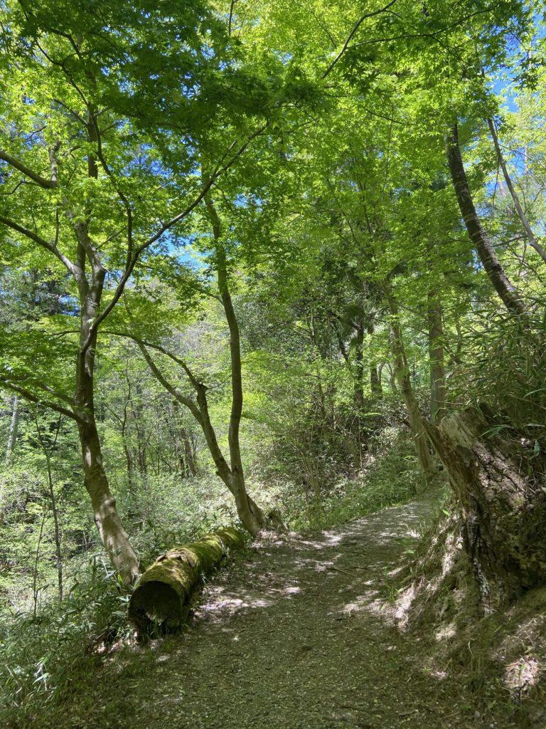 新緑の三河湖園地を歩く