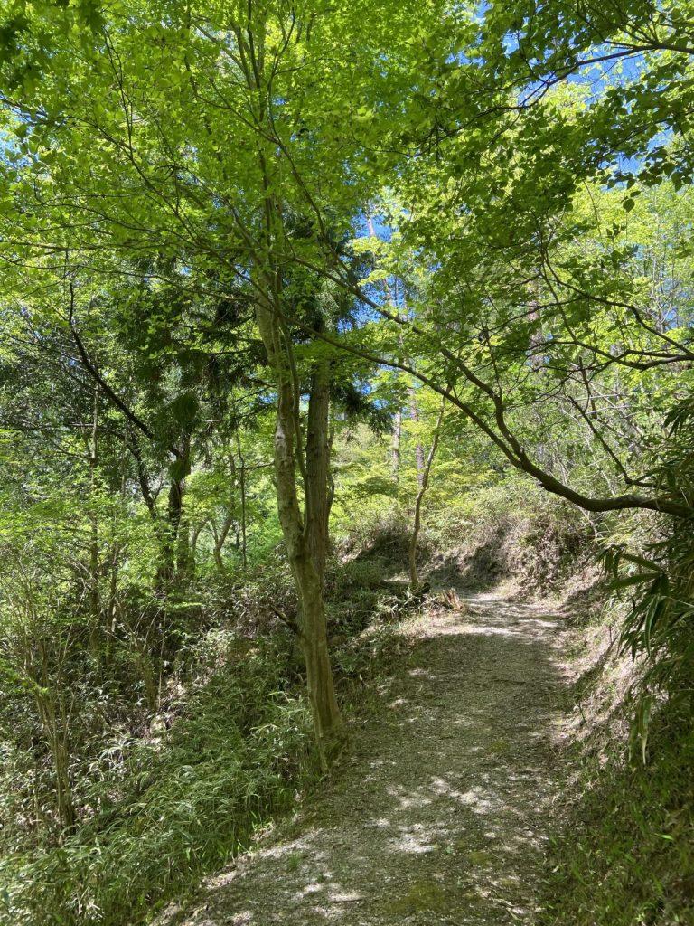 新緑の三河湖園地